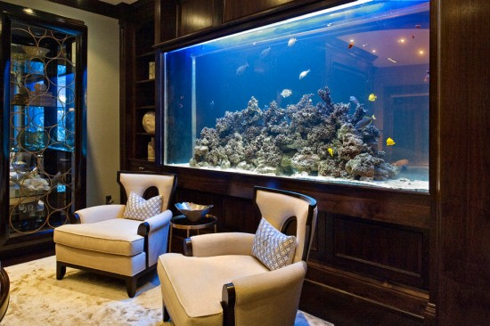 A fish tank can help de-stress and relax you
