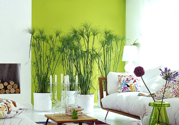 Paint one wall a bold color
