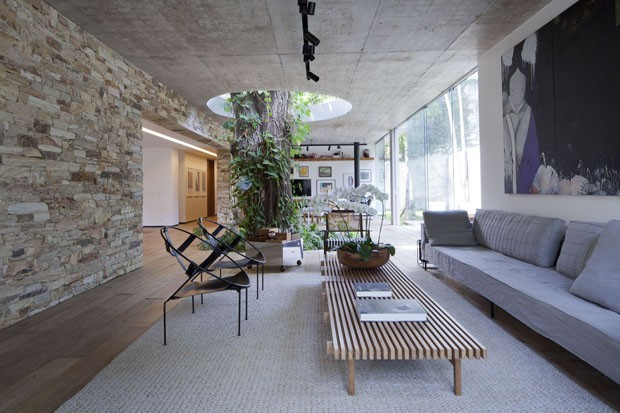 Interior designed around a tree