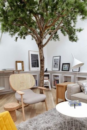 Bringing nature indoors with a tree