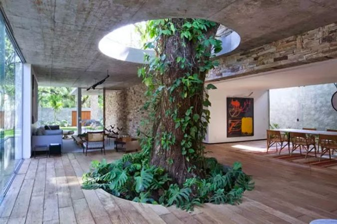 A tree grows inside the home