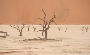 Sossusvlei, clay pan with red dunes and dead trees, Namibia