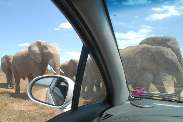 Elephants through windshield of car, in Addo National Park, South Africa road trip