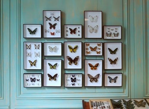 A display of butterflies gives a boost to nature-inspired décor