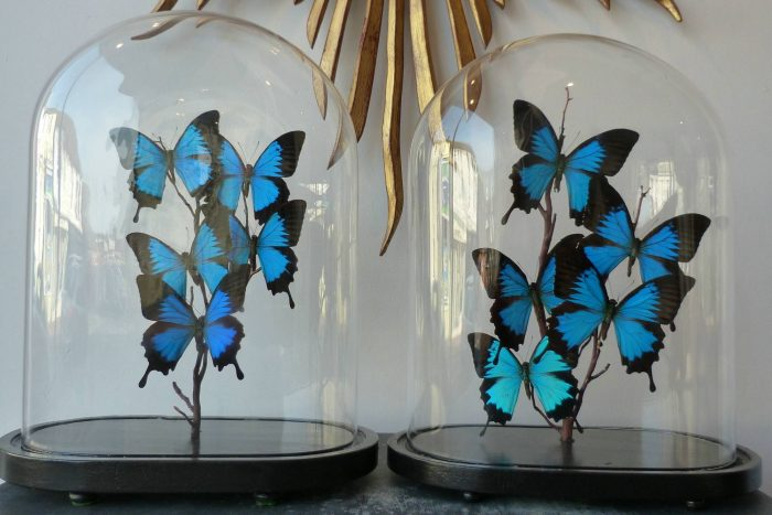 Butterfly accessories lend an interior fresh color and flights of fancy