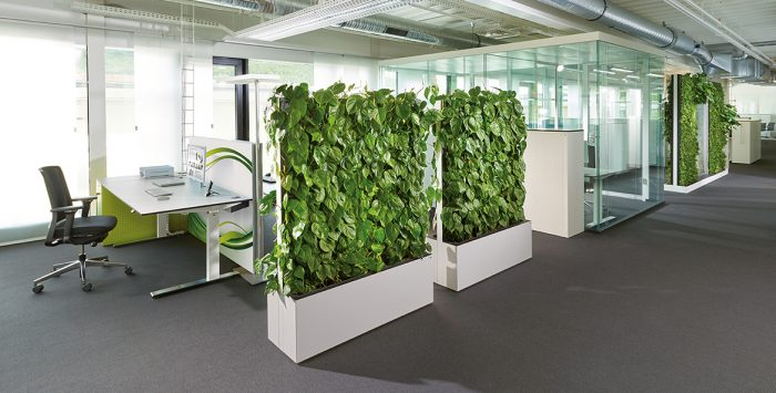 plants to keep the air clean