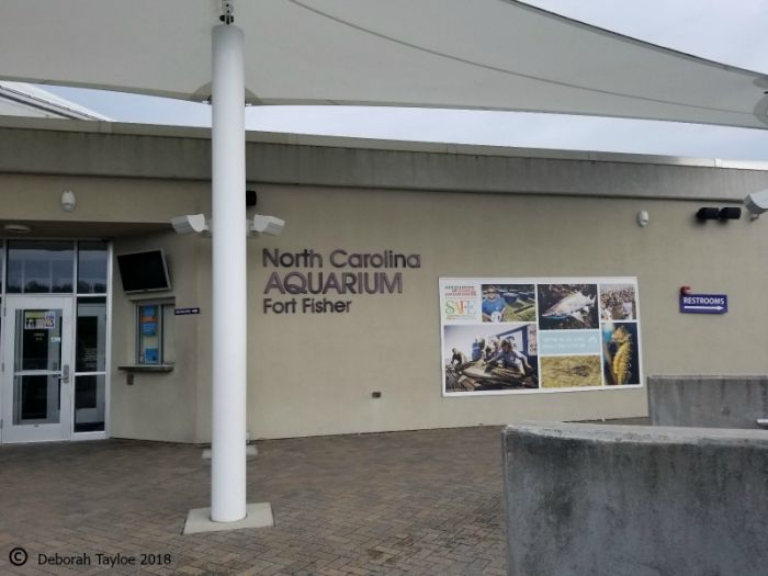 Visit the North Carolina Aquarium. Of course, this is located on Pleasure Island. It's located in the Fort Fisher area.