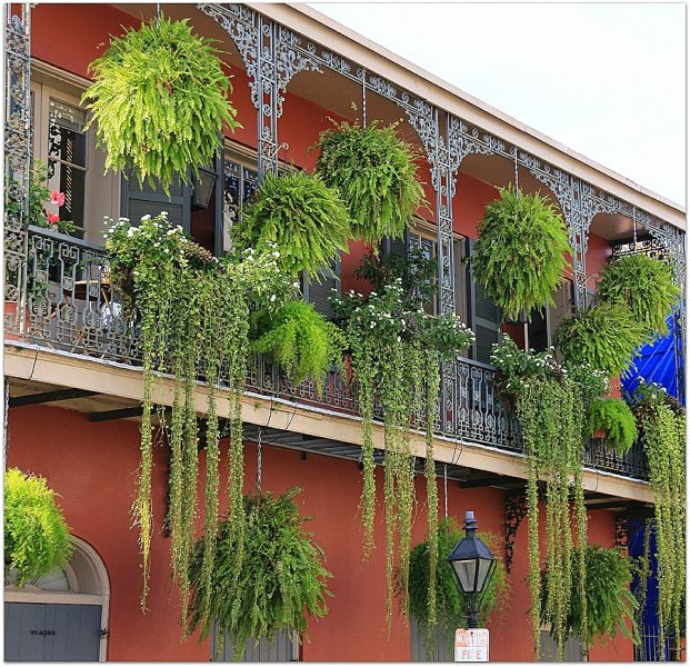 Balconies draped in greenery in the French Quarter, New Orleans (hirota.oboe.com)