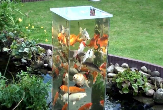 Arrange tall and short water plants all over a pond.