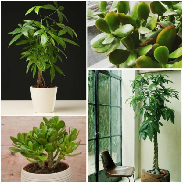 Plants for wealth