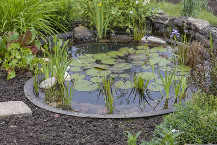 green water garden ideas