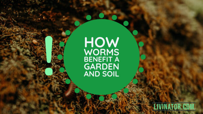 How Worms Benefit a Garden and Soil